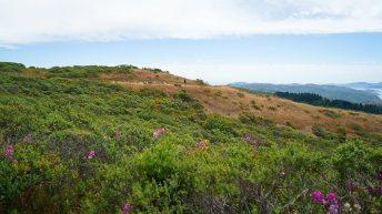 Mt Tamalpais Deepsea Trail